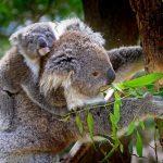 バイリンガルにするためにオーストラリア移住ってぶっちゃけどうなの?