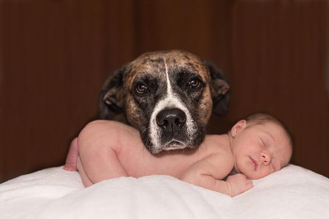dog-1718242_640-1